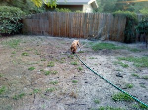 playing with the backyard sprinkler