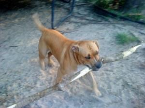 Big dog - Big stick!!