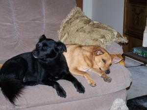 Riley and Joey....naughty naughty...not allowed on the couch